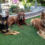 Sadie, Maggie & Jenny