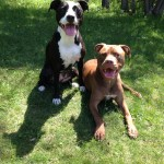 Zoey & Zeke